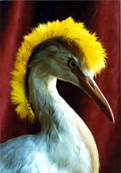 Egret aigrette